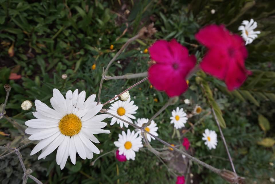 Equinoccio - Primavera